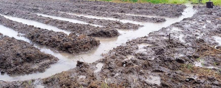 Tilasto: Perunapaikkakuntien sademäärät